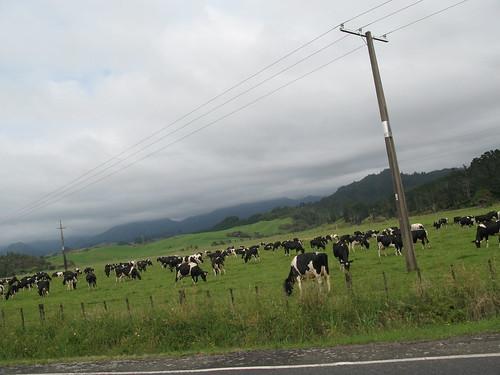 New Zealand 533
