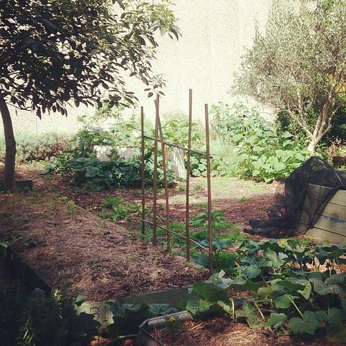 Alexandria Community Gardens - at the Milkwood Serious Backyard Vegies course.