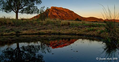 mountain reflection tree water grass sunrise reeds landscape pond farm australia farmland qld queensland hdr 2016 scenicrim mtmaroon seqld mtbarneynationalpark sonya7r aurorahdr