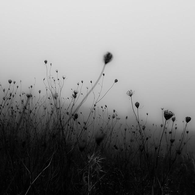 Lakeside Fog 044