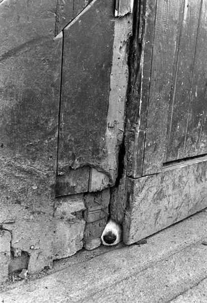 Jill Freedman, Nosy Barker, Ireland, 1974