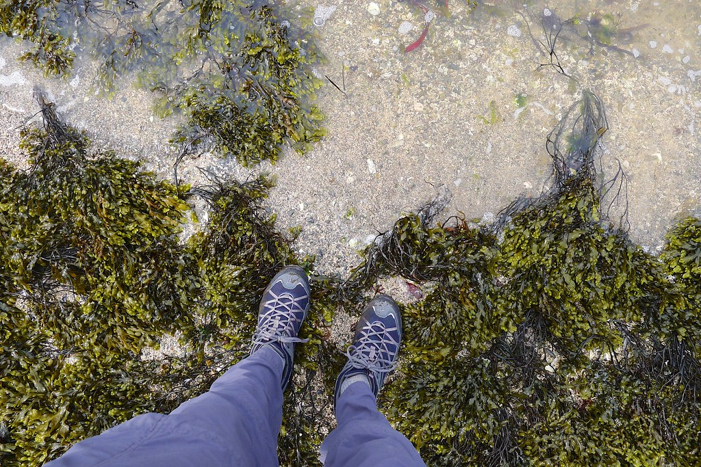 Dipping my toe in the west coast waters