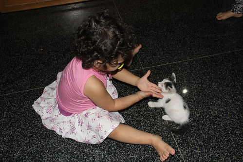 My Grand Kids And The Kitten by firoze shakir photographerno1
