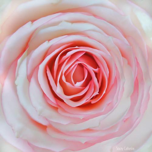 forever petals