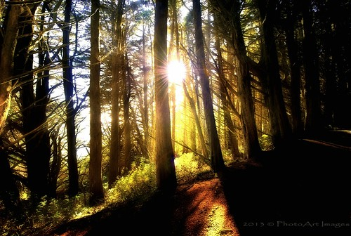 forest nzsouthisland sunshineintheforest jesuscmsfavoritesgallery flickrsfinestimages1 photoartimages