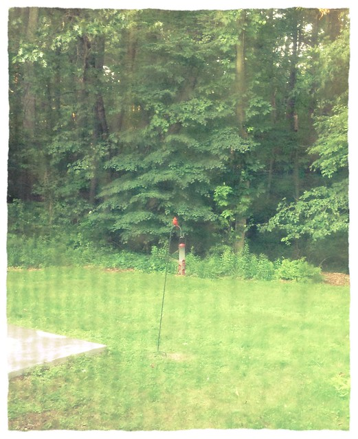 The odds of seeing a cardinal on the bird feeder increases the further away my camera is from me.