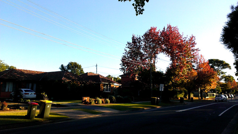 Circle tree 1