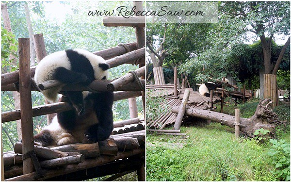 Chengdu - Panda Breeding Farm-031