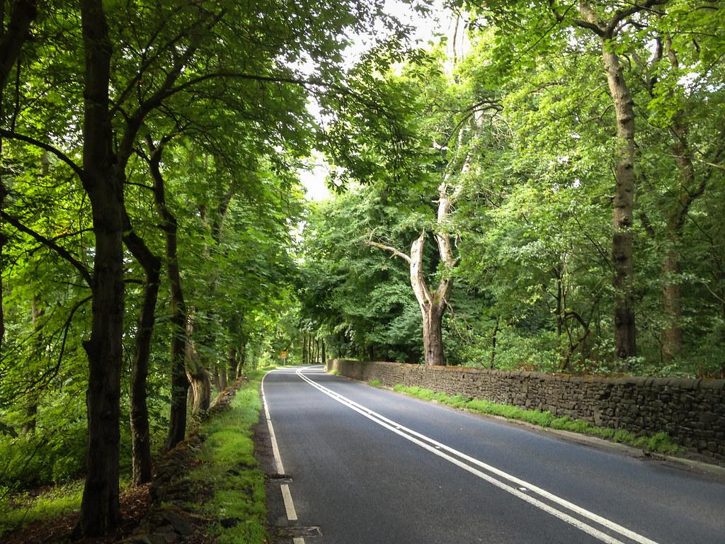 Road through trees