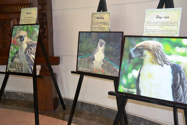 Fwd: Philippine Eagle Foundation