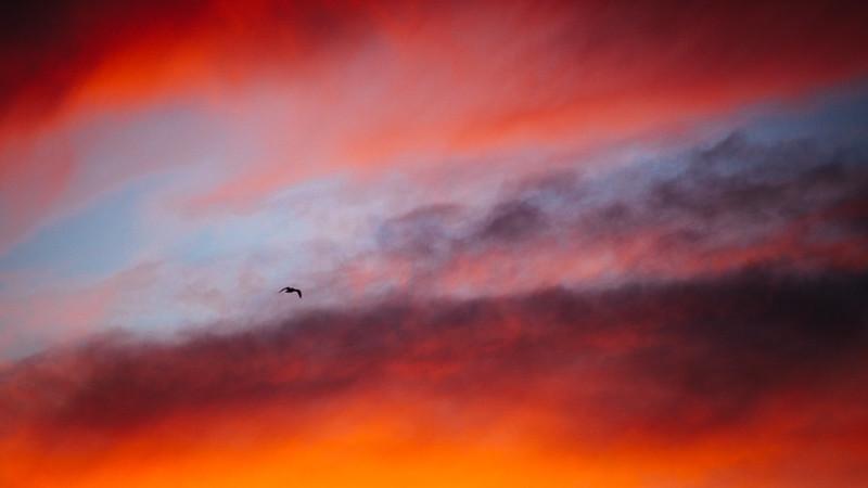 鳥、夕燒。