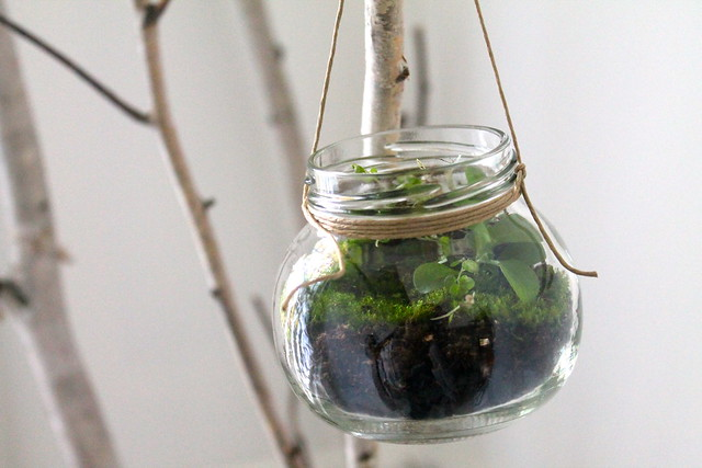 Diy Miniature Terrariums In Recycled Jars Most Lovely Things