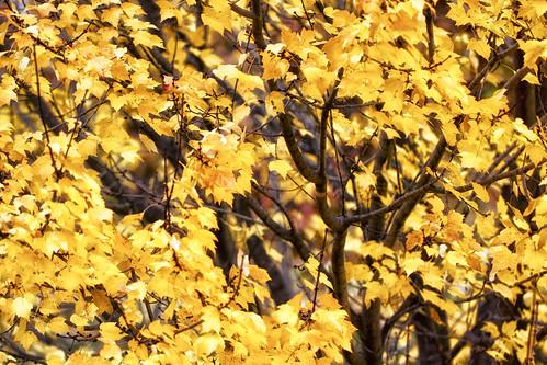 11-13 fall-9516-Edit-19