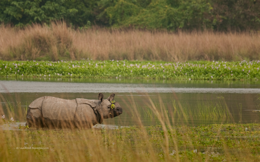 Rhino9