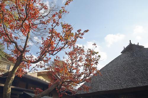 【写真】2013 紅葉 : 西行堂/2020-09-05/IMGP4747