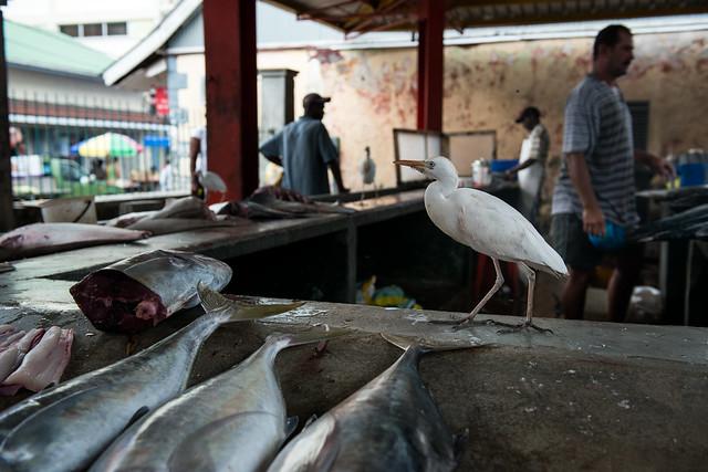 Fish market, Victoria