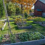 The garden at Avalon