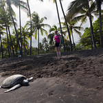 Emily and a turtle, Punalu'u Black Sand Beach