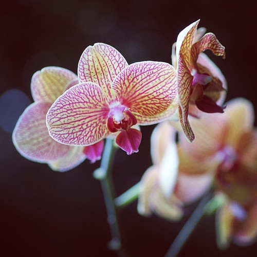 Orchids at #moodygardens