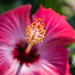 Flor by mdelcid