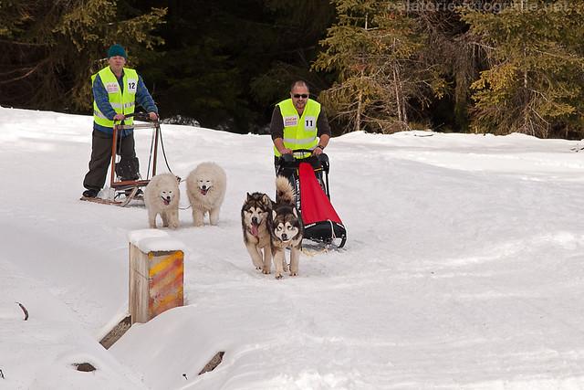 Cupa Beliș 2014 - primul concurs de atelaje canine desfășurat vreodată în județul Cluj  12287899876_b62f2627d8_z
