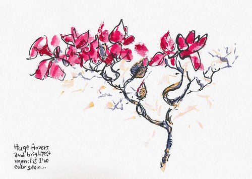February 2014: Hunting for Perfect Magnolia