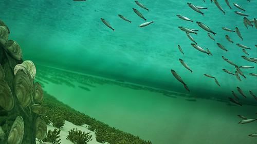 Under ytan simmar fiskar.