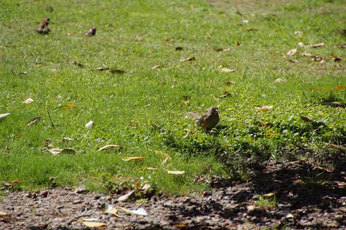 104 Vogel in parkje bij cementerio de la recoletta
