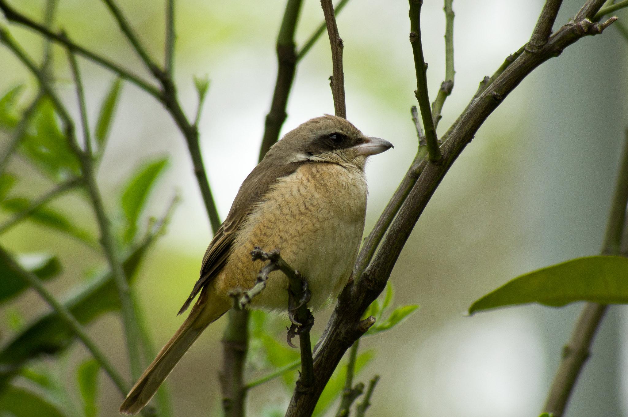Tokina 80-400打花打鳥