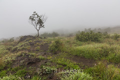 Trail Starting at Hilina Pali Overlook in Hawai'i Volcanoes National Park