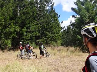 Mount Gibbarnee Forest
