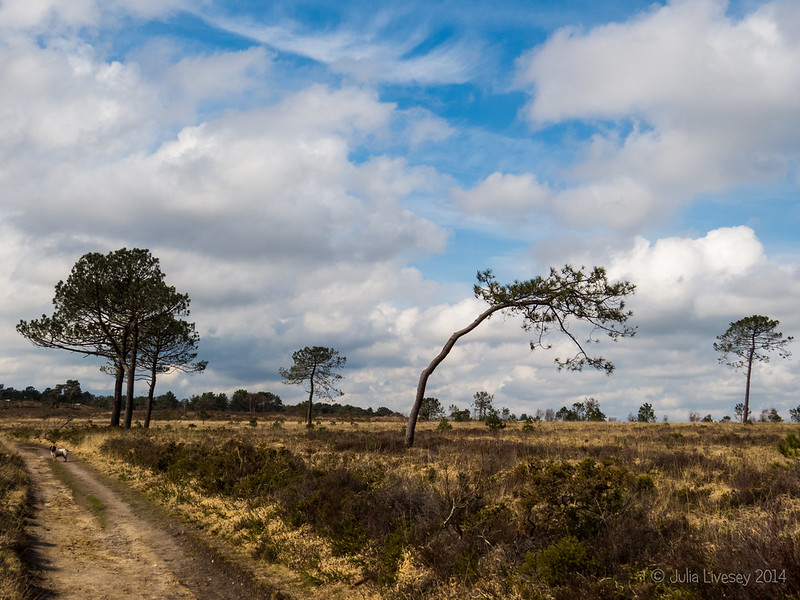 We had some sunshine on Canford Heath today