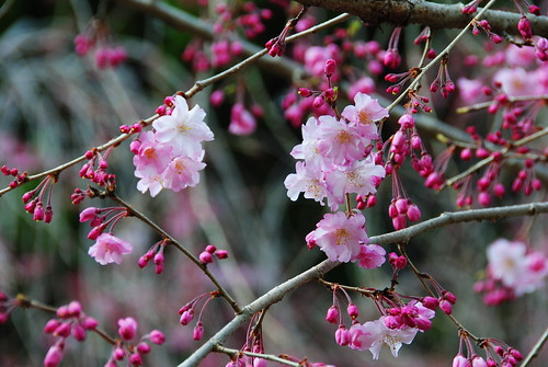 Inuyama Spring 2014 014r