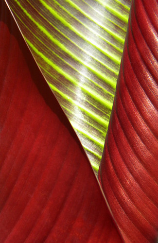 banana leave abstract