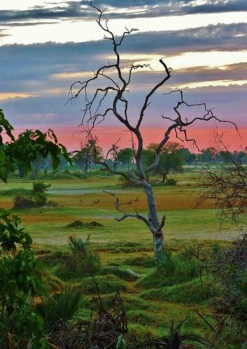 sunset landscape ngc npc moremigamereserve okavangodelta xigeracamp botswana2013