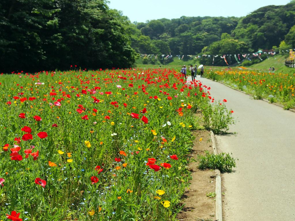 Kurihama Flower Park