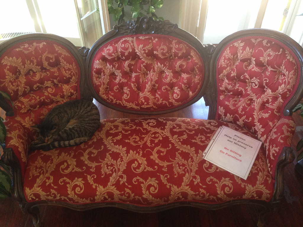 Cats sitting on furniture in Hemingway House