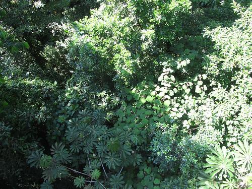 La Réserve de Monteverde: vue du pont suspendu