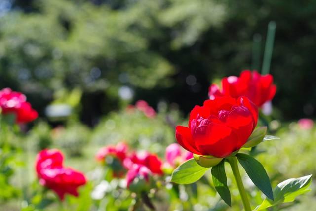 2016/05/04_神代植物公園-5