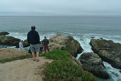 Bodega Bay - Bodega Head Whale sighting