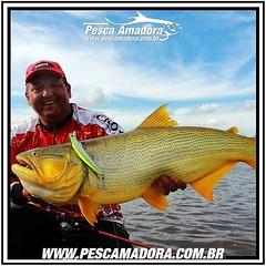 Olha ai o Juninho do Raizes da Pesca na Fishtv com um belo douradão. Com as águas mais frias, o dourado é um dos peixes que você pode ter sucesso na pescaria.  #pescaamadora #pescaesportiva #pesqueesolte #pescador #pescaria #pesca #dourado #baitcast #flyf