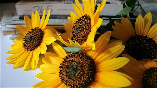 happy summer solstice..