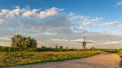 Summer evening in Kinderdijk