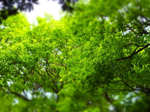 甲山森林公園にて (37)