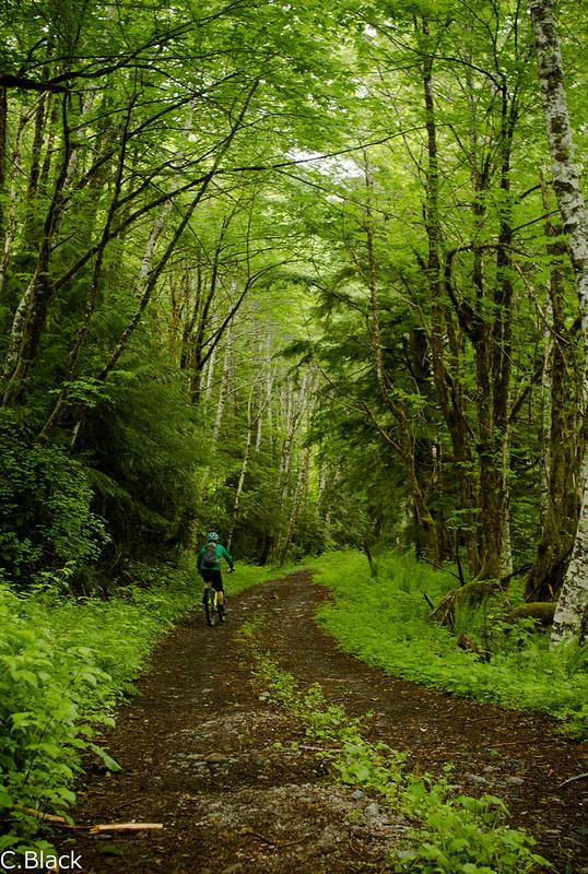 Middlefork greenery by bike