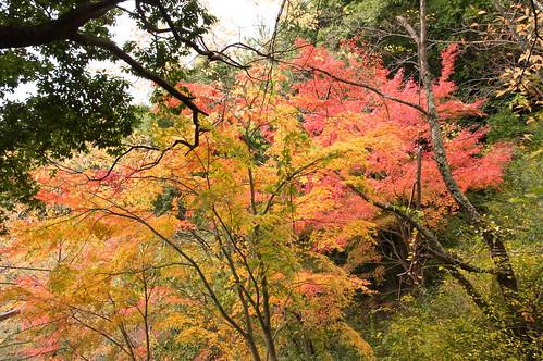 【写真】2012 紅葉 : 笠置山もみじ公園/2020-05-28/IMGP6118