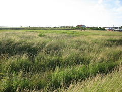 wetland(0.0), agriculture(0.0), soil(0.0), paddy field(0.0), lawn(0.0), salt marsh(0.0), waterway(0.0), marsh(0.0), bog(0.0), prairie(1.0), land lot(1.0), farm(1.0), steppe(1.0), ecoregion(1.0), field(1.0), grass(1.0), plain(1.0), plant(1.0), natural environment(1.0), crop(1.0), meadow(1.0), pasture(1.0), rural area(1.0), grassland(1.0),