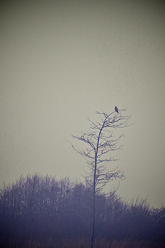 old winter england cold tree bird nature weather gloomy cheshire empty wildlife eerie moore lonely aged applecrypt
