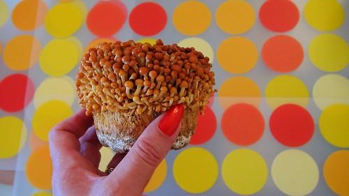 Mushroom bomb! Golden Enoki ....