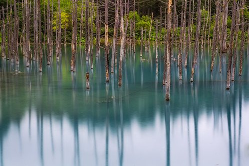 longexposure blue pond hokkaido sony 北海道 biei shirogane 美瑛 nex hokkaidoprefecture 青い池 nex7 dheej18 djvillanueva aoiike sonynex7 kamikawadistrict